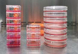 细胞培养如何选择细胞培养基?
