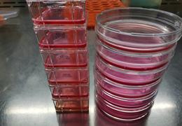 细胞培养的5大基本条件