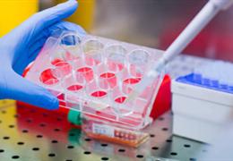 原代细胞培养的类型