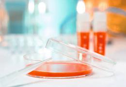 动物细胞培养实验室6大基本要求