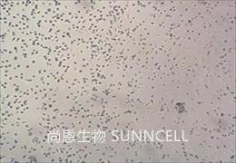 原代细胞培养中常见的六大错误