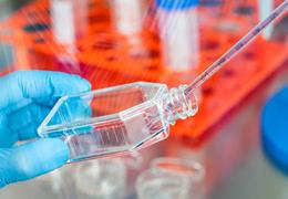 培养细胞纯化的两大方法