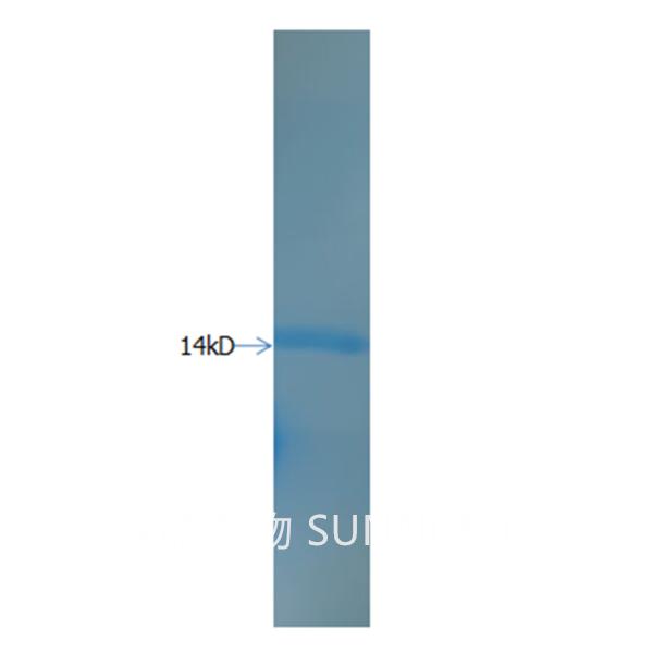 重组人粒细胞刺激因子rhGM-CSF图3