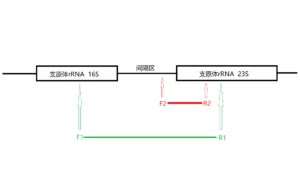 SNCD-001原理图
